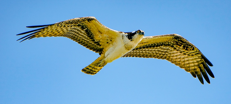 EckFoto Wildlife Photography